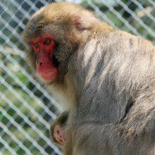 Zoo St-Édouard 2016 (30)