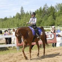 centre-equestre-mauricie-cheval.jpg