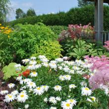 wpid-photo_centre_jardin_3.jpg