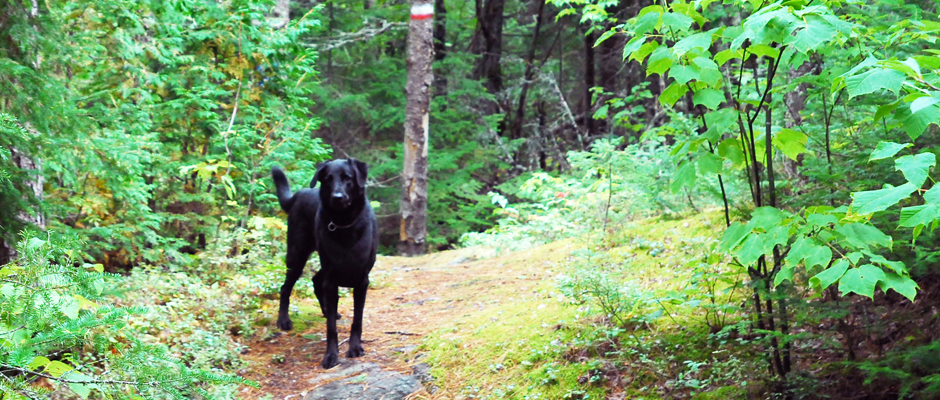 campings chien header