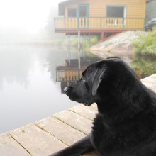 chalet-louer-chien-mauricie