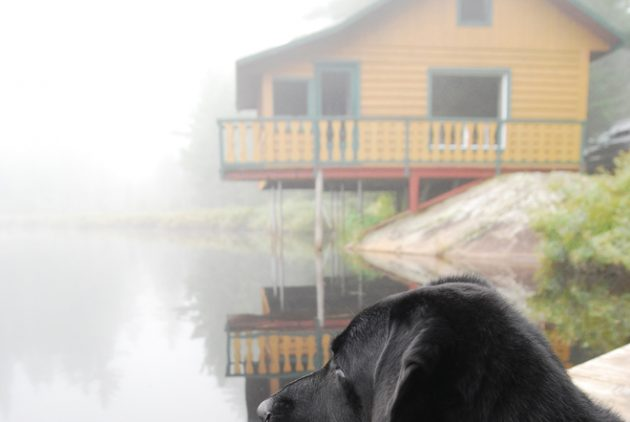 chalet-louer-mauricie-acceptent-chiens