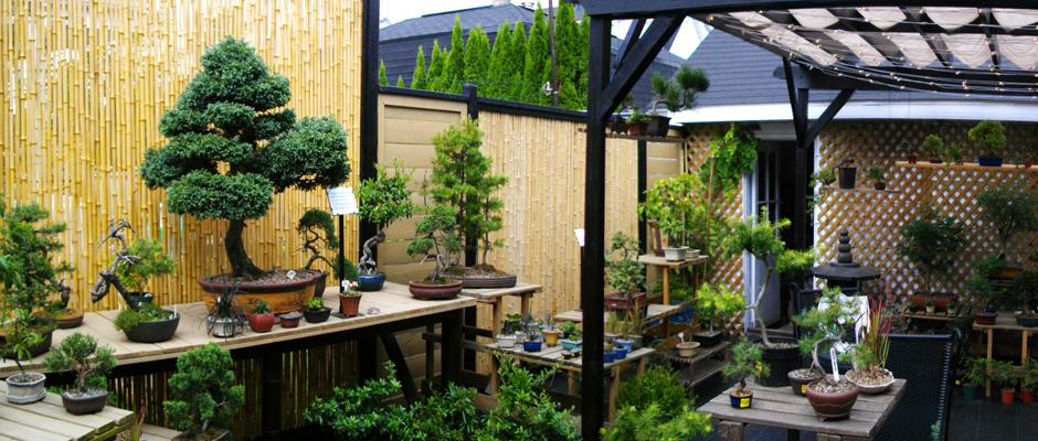 dcouvrez lart du bonsa la boutique cadeaux art et culture bonsa de shawinigan