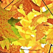 automne-slider-feuilles-TM