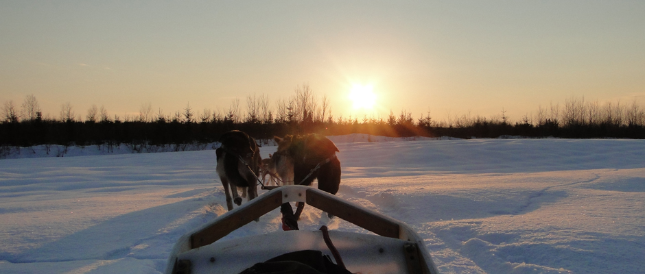 traineau-chiens-manitou-musher