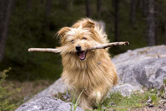 Sortir avec son chien en mauricie lieux et activit s o for Hotels qui acceptent les chiens