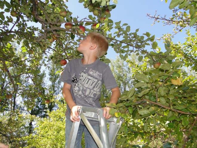 centre-biodiversite-pommes-tm