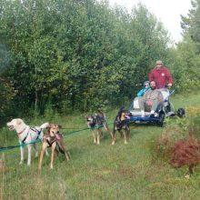 manitou-mushers-chiens-sur-roues-tm