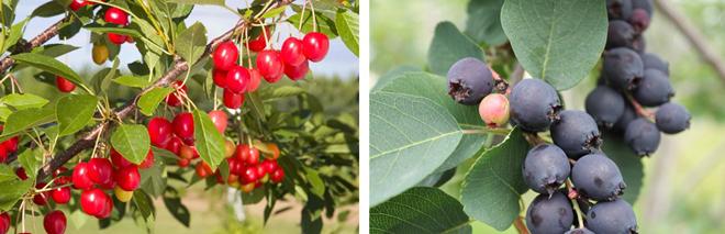fruits-aliments-sante