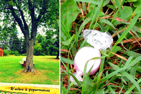 st-elie-de-caxton arbre a paparmannes