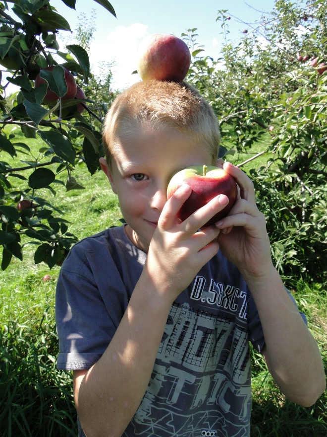 cueillette_pommes