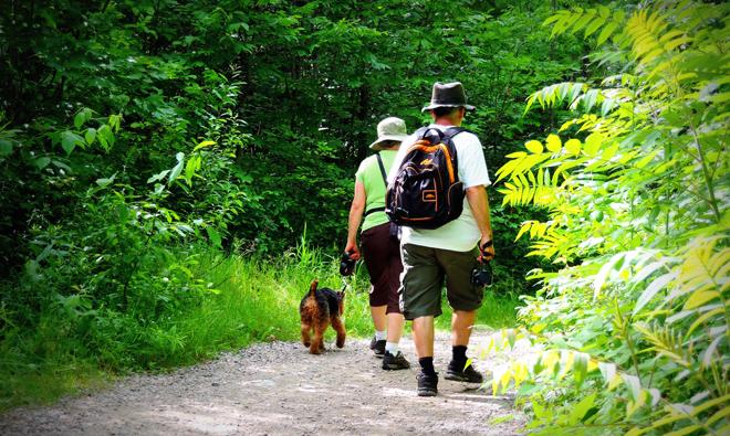camping qui acceptent les chiens