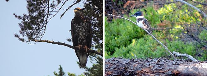 faune-pourvoirie-lac-oscar
