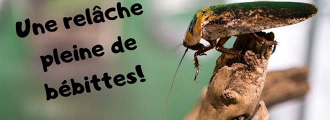activite-mars-becancour