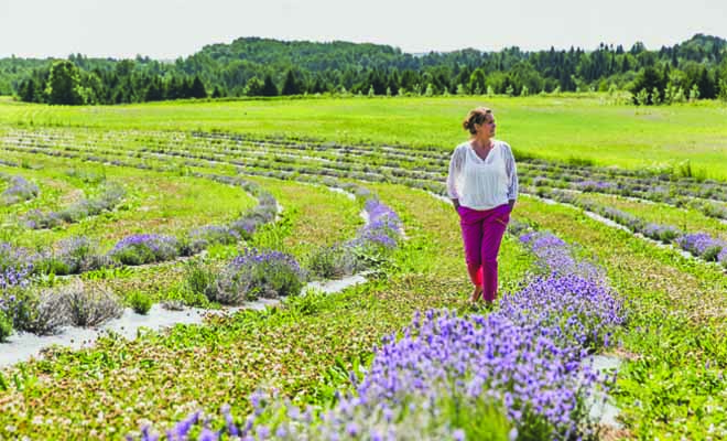 mauricie gourmande agrotourisme producteur local