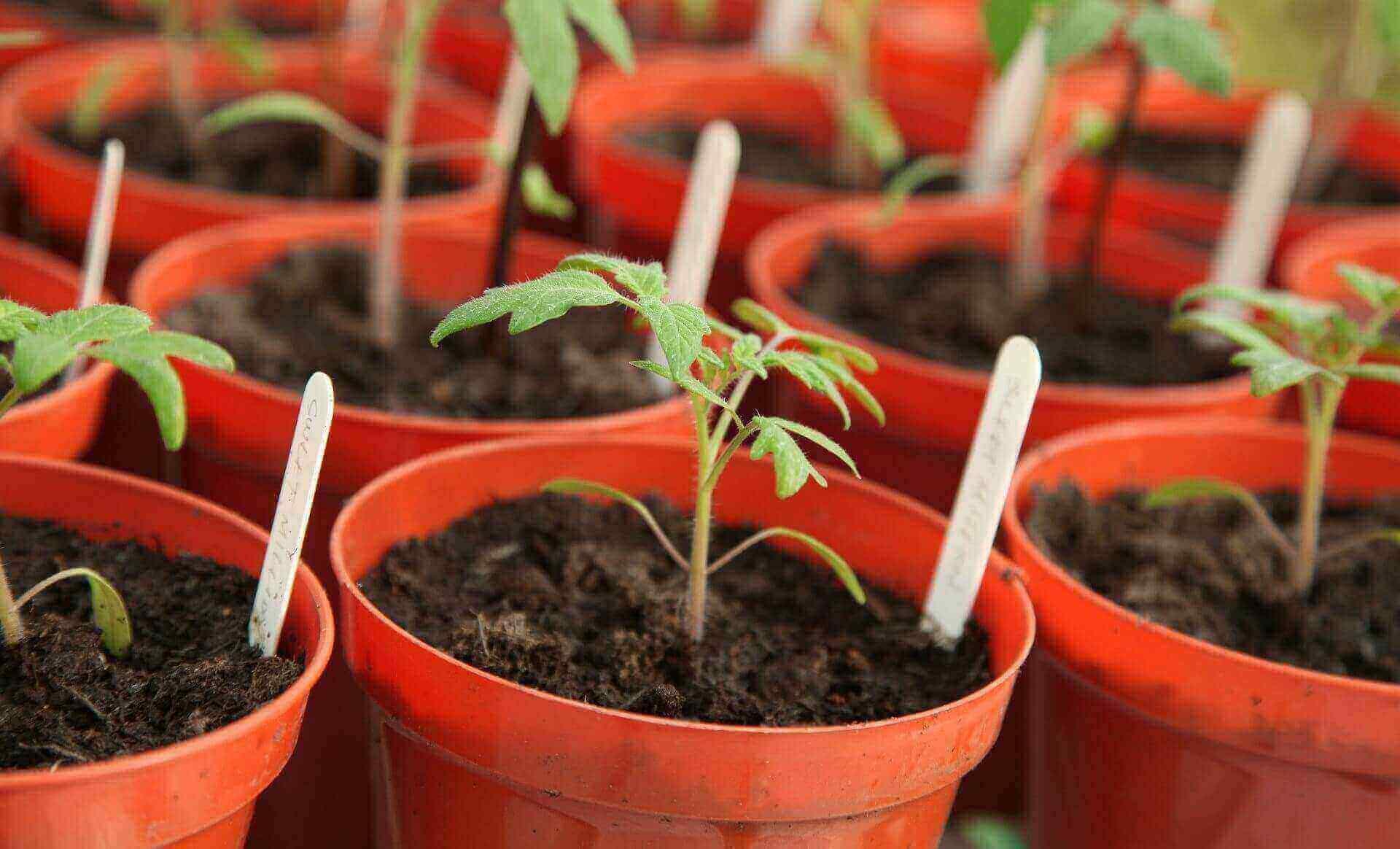 Faire un jardin potager, partir ses plants en pots
