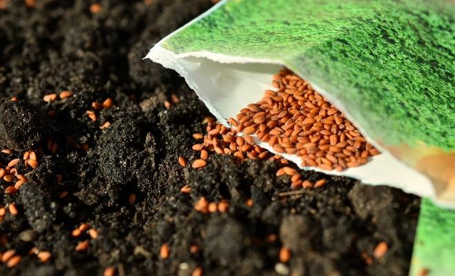 Semences à jardin pour jardin potager