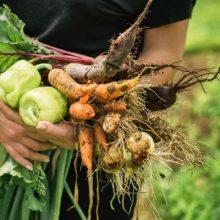 Jardin potager et légumes de saison au Québec