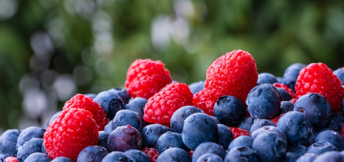 Où cueillir des framboises fraises et bleuets en Mauricie