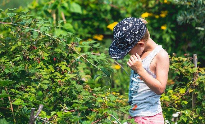 Autocueillette petits fruits en Mauricie, activité pour la famille