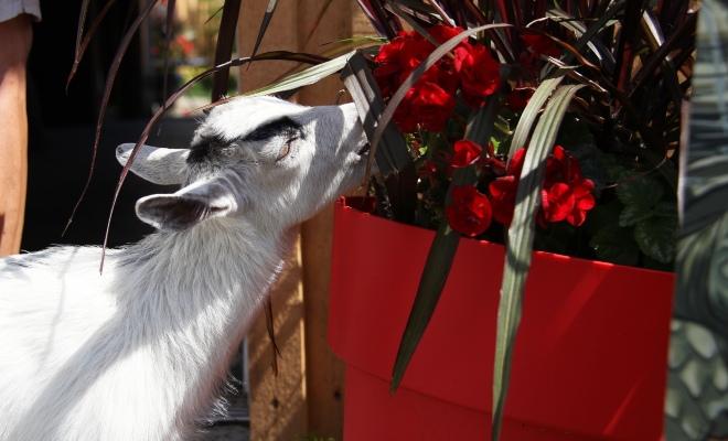 Activité animaux de la ferme, Ranch Dupont en Mauricie