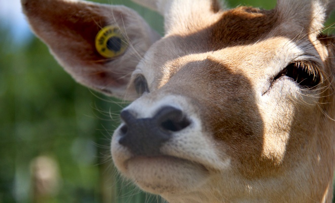 Ranch Dupont, activité avec animaux en Mauricie