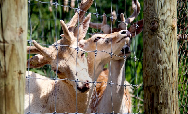 Ranch Dupont, activité à Trois-Rivières et Shawinigan