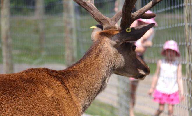 Ranch Dupont, activité à faire en famille en Mauricie avec animaux