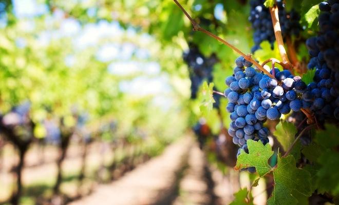 Vignobles en Mauricie, vins de la Mauricie