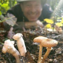 Passionnés de cueillette de champignons