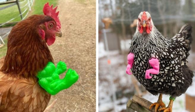 Nouveautés, bras de poules